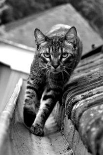 Catwalk by Sarah Domingos