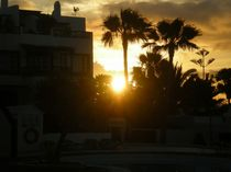 Die Sonne geht auf von biene