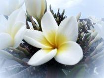 Wunderschöne Kaktusblüte von biene