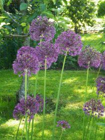 Blüten by biene
