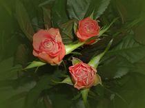 Ein Rosengruß by biene