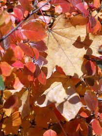 Die Schönheiten des Herbstes von biene