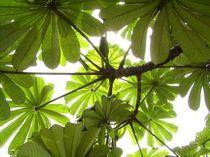 tropisches Blattwerk von Torsten Neundorf