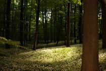 Bärlauch im Laubbärwald - Allium ursinum von Gerald Albach