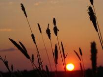 Gras im Sonnenuntergang von Andre Helfrich
