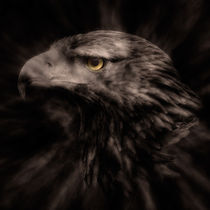 Eagle Eye by Peter Rees