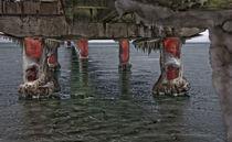 Seebrücke Prerow von lolly
