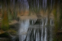 Im Moor von lolly