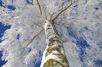 Schneewelten von Tanja Riedel
