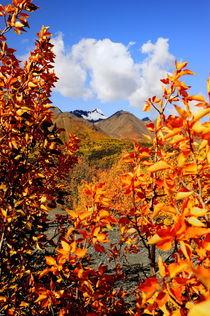 Herbstlaub von Ralf Kayser