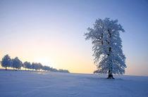 Wintertraum by lichtmalerin