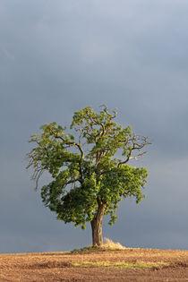 Baum im Licht by lichtmalerin