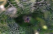 Spinnennetz von lichtmalerin