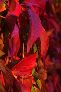 Herbstblätter by lichtmalerin
