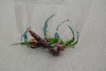 Stillleben am Meer von julita