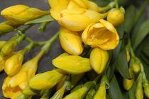Die gelbe Romantik by julita