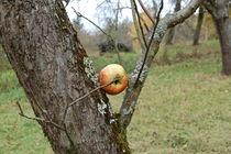 Herbstnoten by julita