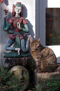 Katzenportrait by Rainer Elpel