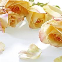 Rosen von Rainer Elpel
