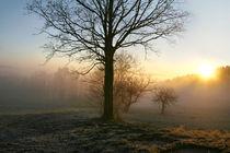 Morgens im Bayerischen Wald by mercedes