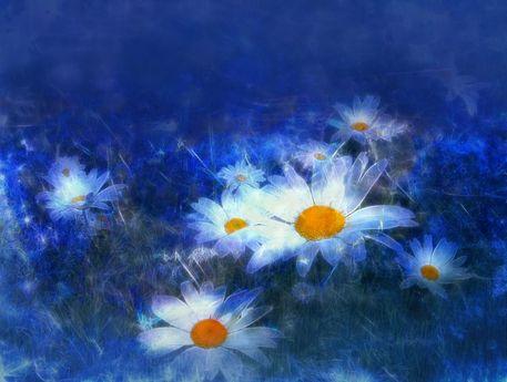 Blaue-margeriten-a