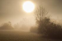 Nebelmorgen von augenblick