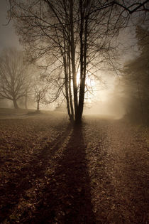 Sonne im Nebel by augenblick