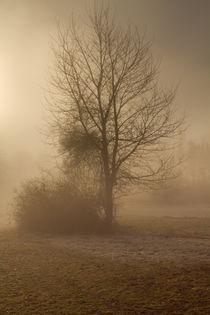 Baum im Nebel von augenblick