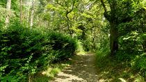 Waldweg by anoreng