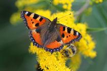 Butterfly on flowers von Detlef Otte