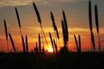 Letztes Licht von Andreas Meer