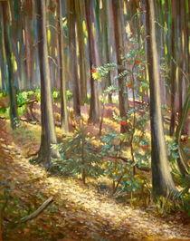 Waldlichter. Eberesche by Andreas Abel