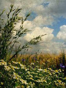 Gräser und Feldblumen II (Vintage) von Mathias May