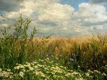 Gräser und Feldblumen (Vintage) von Mathias May