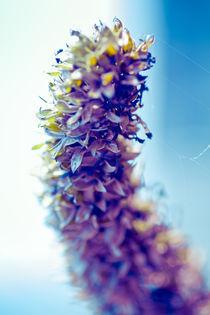 Frühlingsblau II by Mandy Tabatt