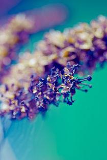 Frühlingsblau III by Mandy Tabatt
