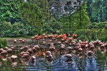 Flamingos by Marko Jordan