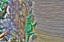 Gecko by Marko Jordan