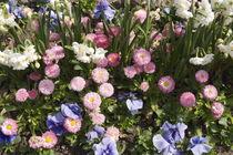 Frühlingsboten by Victoria Garden