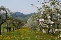 Apfelbäume im Frühlingskleid von Victoria Garden
