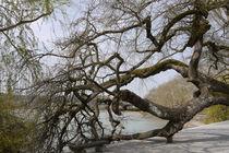 Charakterbaum von Victoria Garden