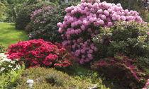 Rhododendrongarten von Victoria Garden