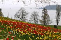 Tausend Rote Tausend Gelbe von Victoria Garden