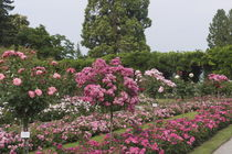 Rosengarten by Victoria Garden
