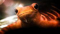 Amphibious Curiosity by Everett Gunther