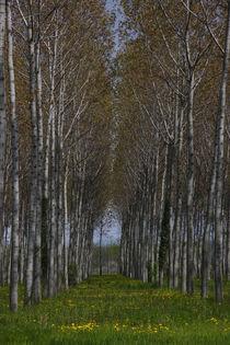 Zündholzbäume by Katharina Kascelan