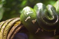 Snake von Thomas Kurka