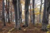 Märchenwald by Kaspars Porins