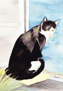 Katze am Fenster von michaba