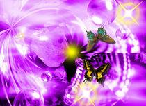 Lila Papillon by Elio Maiuri